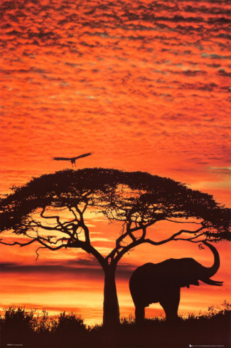 African sunset conviction